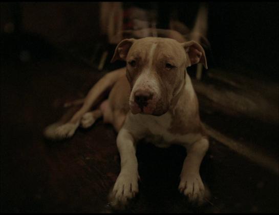 PTL dog2